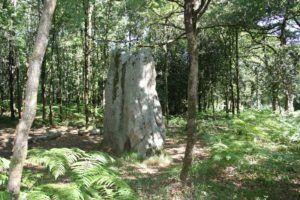 le menhir de la pierre levée