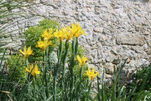 massif de fleurs à Soullans